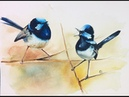 Watercolor Blue Wren Birds Painting Demonstration