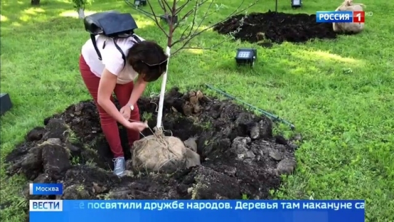 Вести-Москва • Яблоневую аллею на ВДНХ посвятили дружбе народов