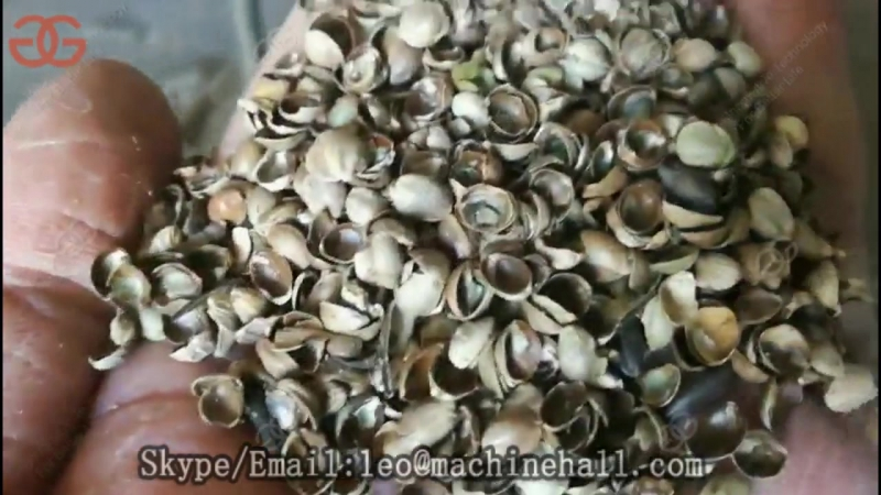 Commercial Hemp Seeds Dehulling Machine Video