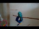 мои волнистые попугаи.