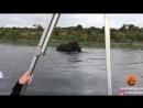 Cлон прогнал надоедливых туристов