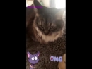 Kitty Purry via Katy's Insta Stories