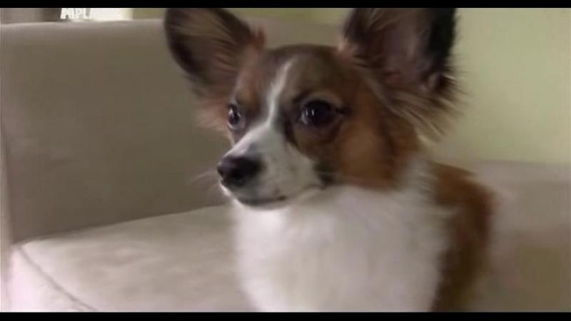 Введение в собаковедение (Серия №19)