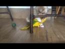 Štěně a papoušek :-))