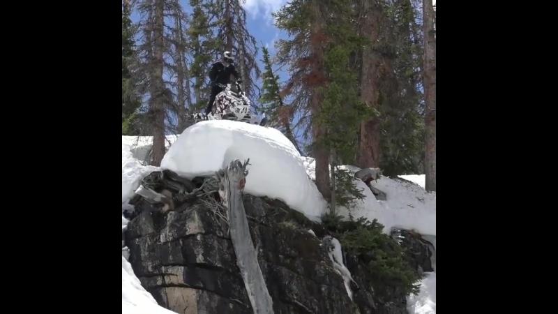 снегоход и дерево-2
