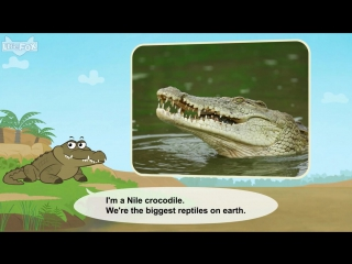 Meet the animals 3- nile crocodile - level 2 - by little fox