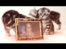 Слайд шоу котята и внучата.