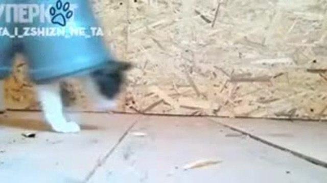 Кот застрял в трубе