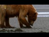 «Планета хищников: Царь медведей» (Документальный, природа, животные, 2007)