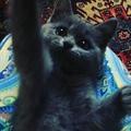 aina_bilalova video