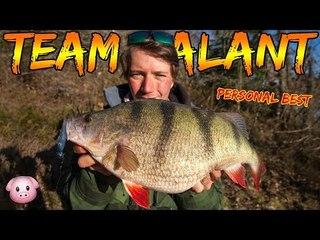 FATTEST PERCH I'VE EVER SEEN - 2,5kg+ | Team Galant (English Subtitles)
