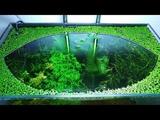 8 Months Update - (Too Many Shrimps) NO filter, NO CO2, NO Ferts 5 Gallon Nano Tank