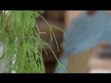 Юнит-экономика- картины из стабилизированных растений