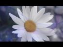 V-s.mobiС Днем рождения, Наташа Красивая видео открытка.mp4