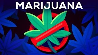 3 аргумента почему марихуана не должна быть легальной и их критика (русские субтитры) [NR]