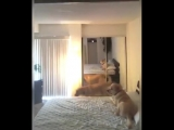 Oh Thats Cool - This video of dogs reacting to a magic...