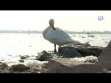 Лебединое озеро в Евпатории нуждается в благоустройстве