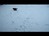 Чуч и первый снег #Фиолентвиль февраль-2018 #кот #котейка #мимими