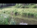 (В-О)-7-07-18г-рыб за плотиной в заливчике.-1 карась был отпущен.