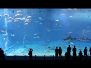 Kuroshio Sea - 2nd largest aquarium tank in the world - (song is Please Don't Go by Barcelona).mp4