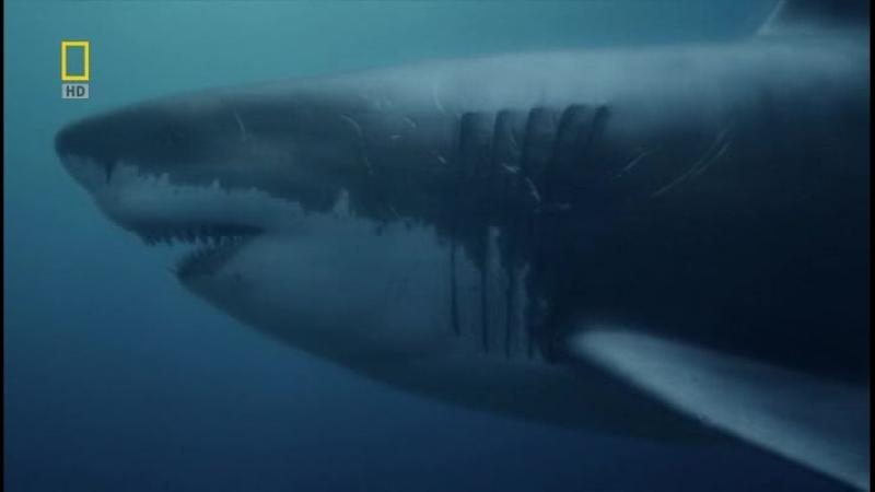 Акула-чудовище (by jlиС R.G. Doc. Films)