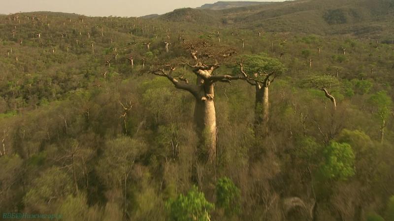 BBC «Мадагаскар (1). Остров чудес» (Познавательный, природа, животные, 2011)