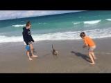 Destiny на пляже ))