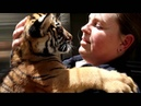 Endangered Tiger cubs cuddle keepers at San Diego Zoo - LOVE