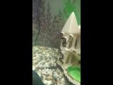 Мой аквариум)