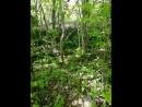 прогулка по жигулевским джунглям