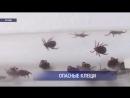 В Оренбургской области выявлены случаи заражения энцефалитом