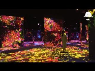 В токио открылся digital art museum