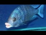 Губастенькая рыба