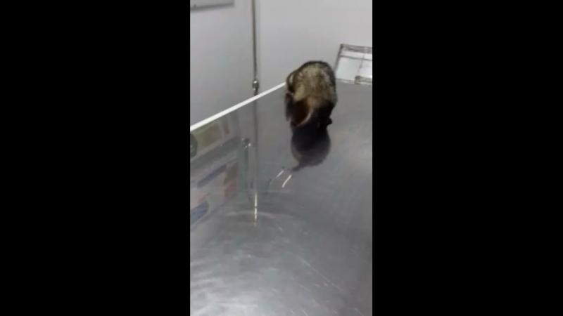 На приеме у врача в зооцентре Ёжкин кот