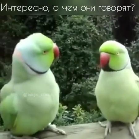 "⏺️ПРИКОЛЫ   ЮМОР  ПОЗИТИВ⏺️ on Instagram: ""😀😀😀 ⬇️⬇️⬇️⬇️⬇️⬇️⬇️⬇️⬇️⬇️ 🔴🔵🔴@prikoly_5m🔴🔵🔴 🔴🔵🔴@prikoly_5m🔴🔵🔴 🔴🔵🔴@prikoly_5m🔴🔵🔴 ⬆️⬆️⬆️⬆️⬆️⬆️⬆️⬆️⬆️⬆️…"""