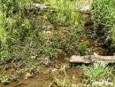 Ручей у плотины