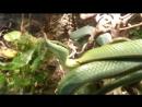 змея-единорог
