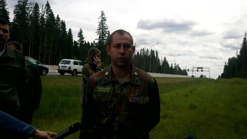 Вырубка леса Приозерское шоссе Ленинградская область