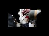 Спасатели реанимировали умершего при пожаре в Волгограде кота