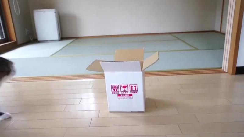 Box vs cats