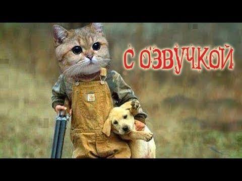 Приколы с котами – озвучка животных – Смешные коты и кошки от Domi show