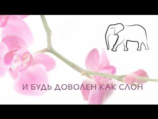 Будь доволен как Слон! :)