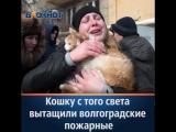 С того света вытащили кошку волгоградские спасатели
