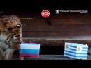 📹 Тигрица из Красноярского зоопарка предсказала победу России в сегодняшнем матче с Уругваем 🎉