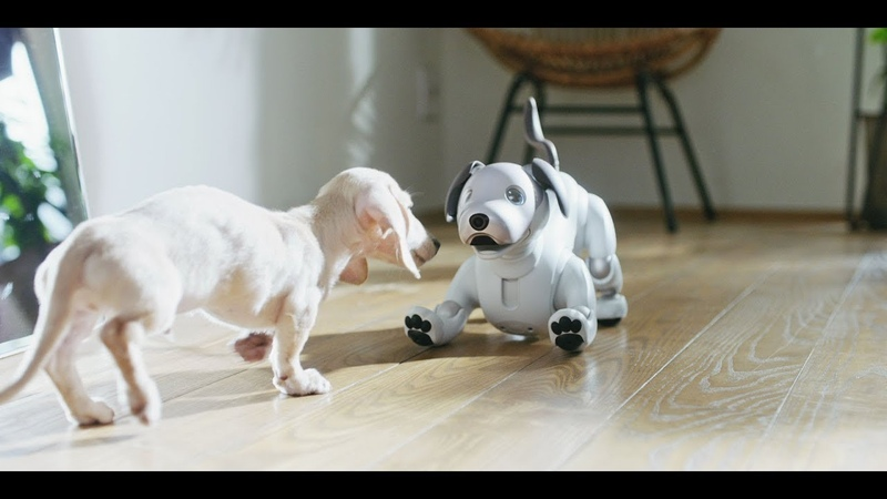 Life with aibo Mirror Version
