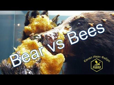 Как медведь ворует мед Bear vs Bees