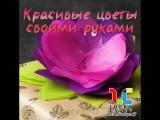 Красивые цветы своими руками ☺ vk.com/luckycraft – подпишись!