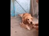 video (6)