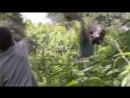 Afrikanskii delikates kotleti iz komarov