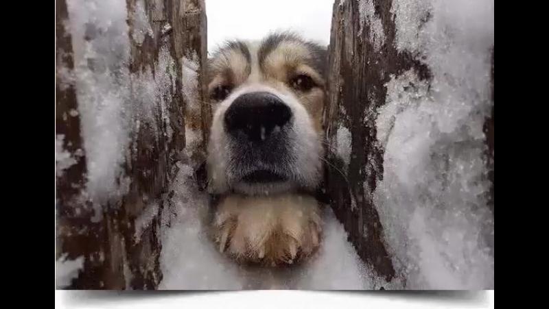 Пусть Собака всех врагов лаем распугает... Только искренних друзей рядышком оставит! Пусть подарит вам она смелость, верность, д